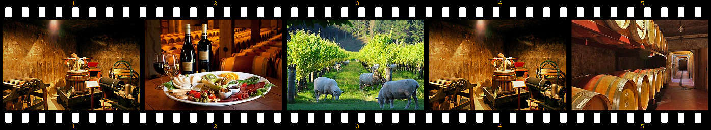 Napier wine tours with Hawkes Bay Scenic Tours