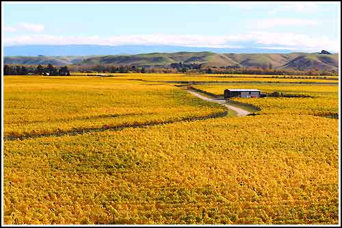 Drive through Vineyards with Hawkes Bay Scenic Tours