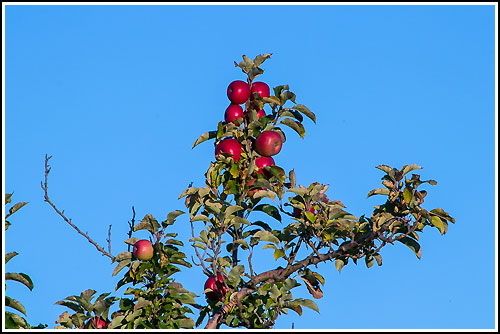 Drive through apple orchards on your tour