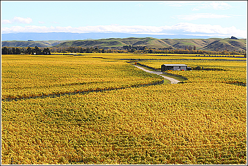World famous Gimblett Gravels in Hawkes Bay