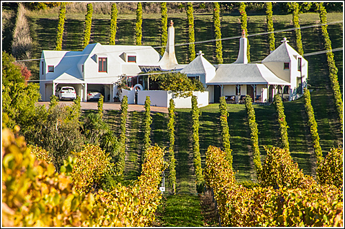Hawkes Bay Vineyard - Te Mata Estate
