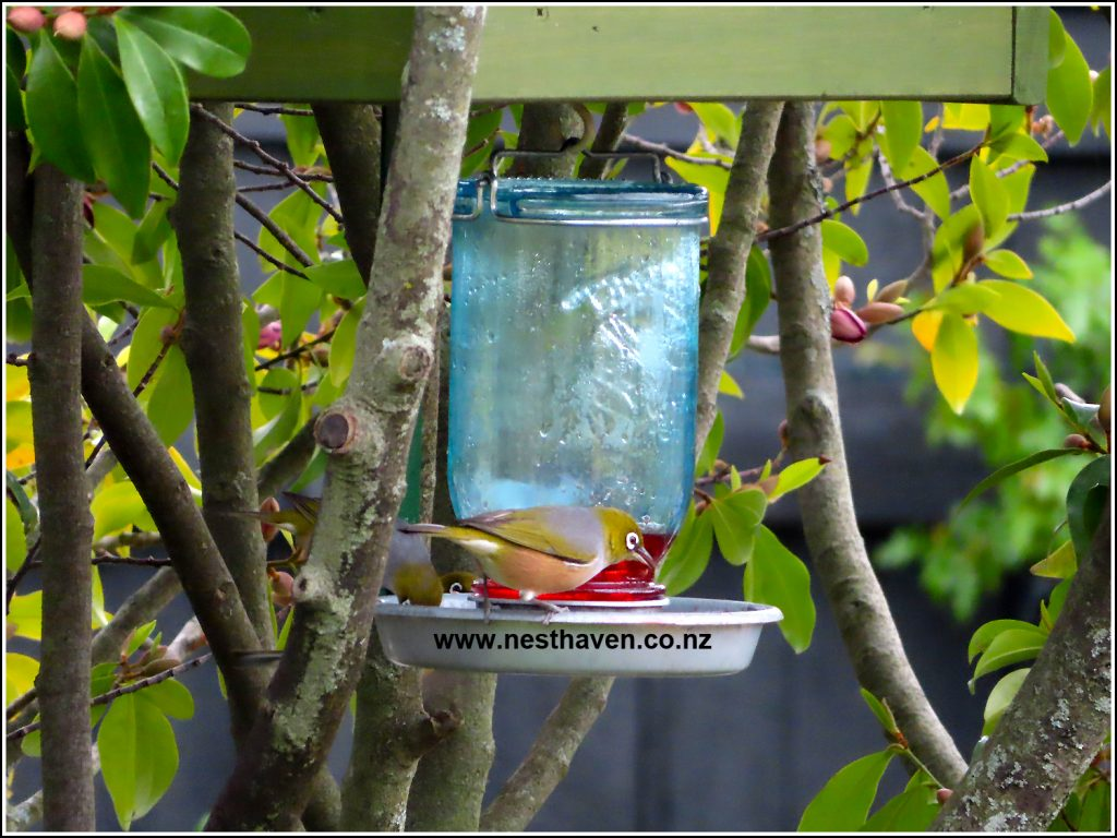 Birds feeding at Nest Haven Bed and Breakfast Napier