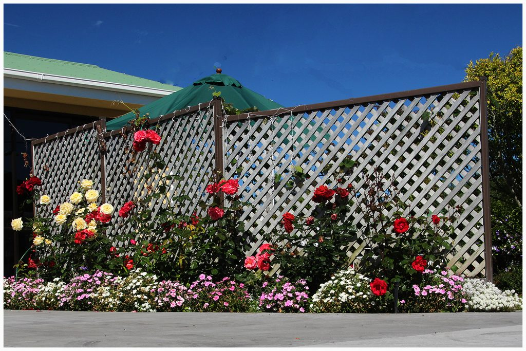 Rose garden in the drive entrance at Nest Haven Bed and Breakfast Napier